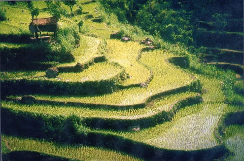 Bali Subak farming listed by UNESCO